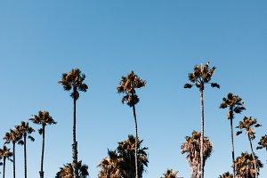 Bird Rock Palms