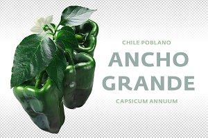 Ancho Grande chile