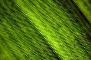 Leaf Texture - Surface