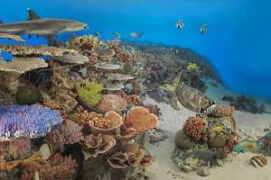 Underwater panorama of a tropical reef with a shark and a turtle