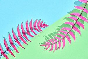 Fern Tropical Leaf. Floral Summer Fashion. Minimal
