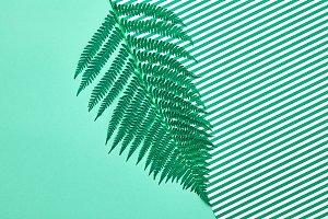 Floral Summer Fashion. Fern Tropical Leaf. Minimal