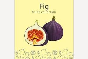 Fig Image