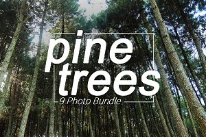 9 Photo Bundle 'Pine Trees'
