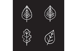 Leaves chalk icons set