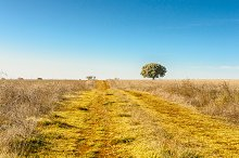 rural road in a field