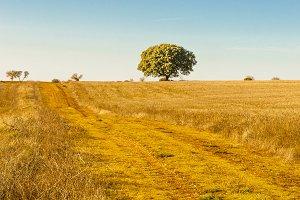 field rural road