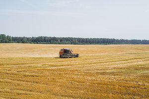 harvesting on the field