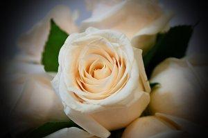 White rose detail vigenette