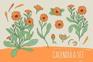 Сalendula set​ and seamless pattern