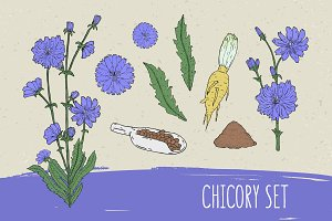 Chicory set​ and seamless pattern
