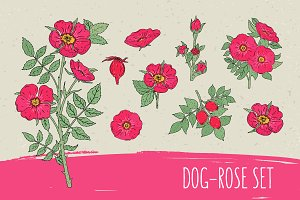 Dog-roses set​ and seamless pattern