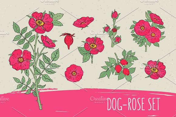 Dog-roses Set And Seamless Pattern
