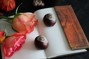Roses, Chestnuts and notebooks