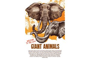 African animals elephants zoo vector poster
