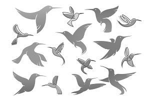 Vector icons of colibri humming bird