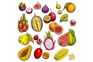 Vector sketch icons of tropical exotic fruits