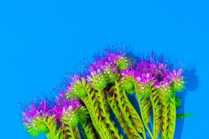 flower on blue background.