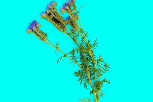 flower on blue background.