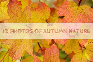 Mini bundle of autumn nature photos