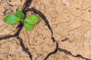 BANNER tree growing on cracked earth. growing tree save. the world environmental problems. cut tree Long Format