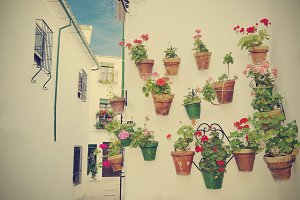 Street scene with pots of flower