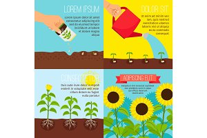 Planting process, growing sunflowers illustrations