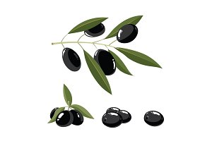 vector illustration set of black Olives with leafs