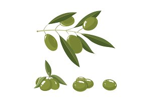 vector illustration set of white Olives with leafs