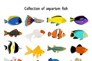Aquarium fish set