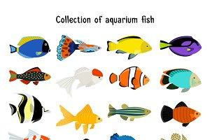 Aquarium fish set