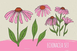 Echinacea set​ and seamless pattern