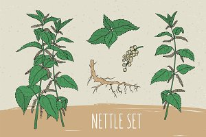 Nettle set​ and seamless pattern