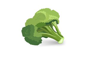 Broccoli green plant vector illustration isolated on white background.