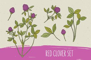 Red clover set​ and seamless pattern