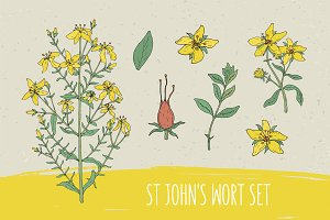 St.John's wort set​,seamless pattern