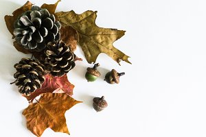 Autumn Styled Photo