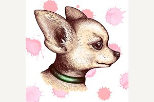 Watercolor dog pet chihuahua vector