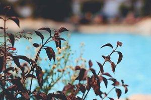 Plants & Pool