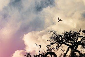 Twisted Halloween Oak Tree and Moon