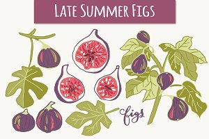 Summer Figs - Clip Art & Vectors