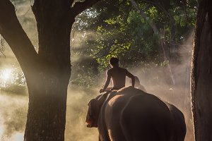 The mahout elephant and elephant