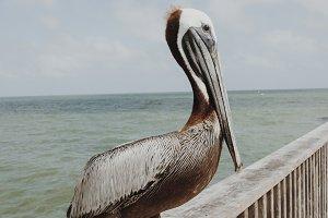 Gulf Bird 1
