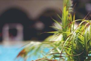 Dry Palm Leafs