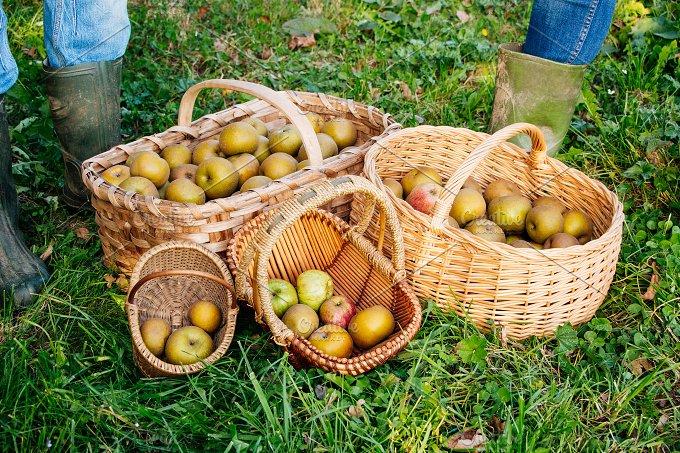 Apple baskets.jpg - Food & Drink