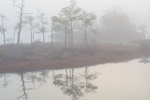 Rime and fog in the swamp