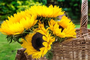 Yellow Sunflower Bouquet in the Basket