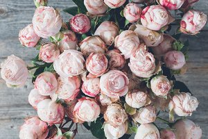 Bouquet of pink shrub roses