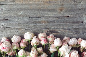 Pink shrub roses on wooden background with copy space for text