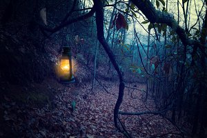 Vintage lantern at the dark forest